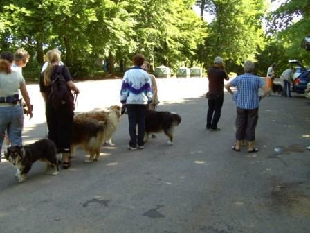 gåture med hund